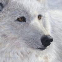 Arctic Gold 9x12 acrylic  -