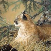 catnap-18x24-gouache
