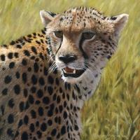 Cheetah Portrait  9x9 oil -