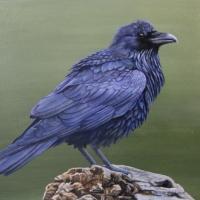 Raven-Study-9-x-12-acrylic