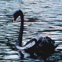 black-serenity-18x24-acrylic