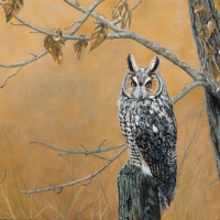 long-earred-owl-9x12-gouache