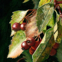 fall-hawthorn-7x5-acrylic
