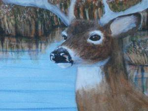 Wildlife Paintings of Alberta