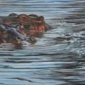 10-or-20-hippos-72-dpi-my-photo