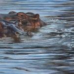 10 or 20 hippos- 10x20